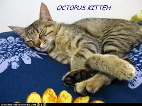 OCTOPUS KITTEH