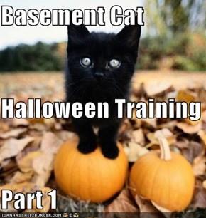 Basement Cat Halloween Training Part 1
