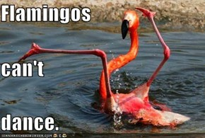 Flamingos   can't dance.