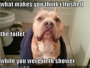 what makes you think i flushed the toilet while you were in th shower