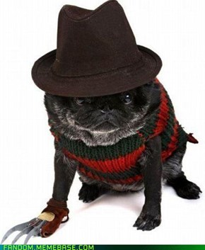 Halloween Inspiration: Pet Costumes!