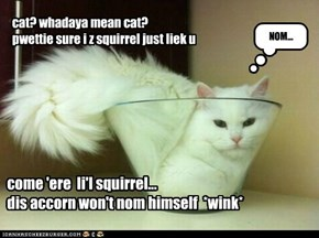 cat? whadaya mean cat? pwettie sure i z squirrel just liek u