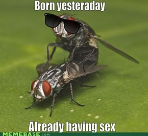 Pretty Fly for a Fly
