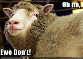 Oh no,   Ewe Don't!