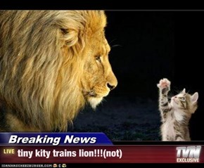 Breaking News - tiny kity trains lion!!!(not)