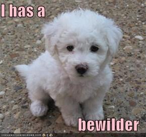 I has a   bewilder