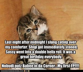 Last night after midnight I slung catnip over      my comforter. Shigi got immediately stoned,    Sassy went into a double helix roll. It was a      great birthday everybody.