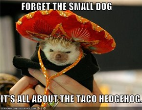 FORGET THE SMALL DOG  IT'S ALL ABOUT THE TACO HEDGEHOG.