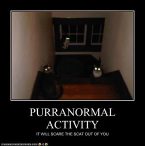 PURRANORMAL ACTIVITY