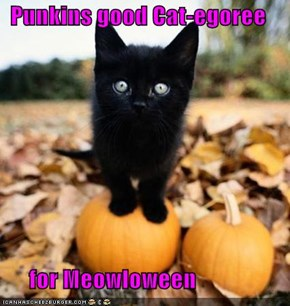 Punkins good Cat-egoree        for Meowloween