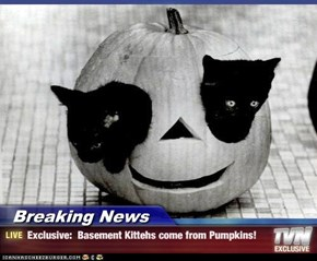 Breaking News - Exclusive:  Basement Kittehs come from Pumpkins!