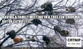 MemeCats: I Hereby Declare This Family Meeting Adjourned!