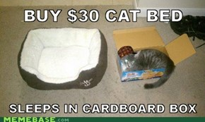 Scumbat Cat