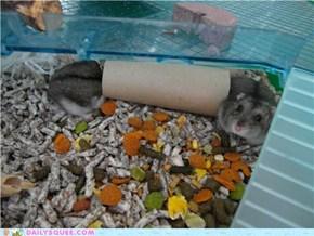 Long Hamster is Longgg