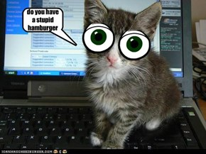 do you have a stupid hamburger