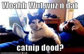 Woahh Wut wuz n dat  catnip dood?