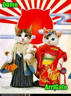 Domo Arr i Gato