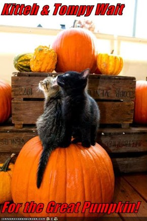 Kitteh & Tompy Wait  For the Great Pumpkin!