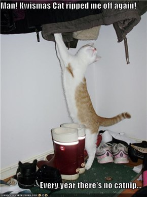 Man! Kwismas Cat ripped me off again!  Every year there's no catnip...