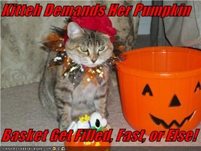 Kitteh Demands Her Pumpkin  Basket Get Filled, Fast, or Else!