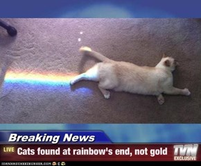 Breaking News - Cats found at rainbow's end, not gold