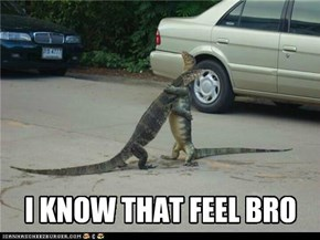 I know that feel, lizard bro.