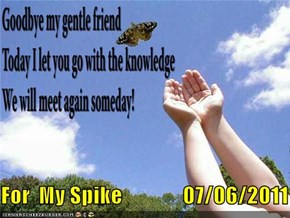 For  My Spike              07/06/2011