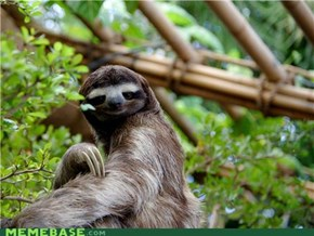 Way-too-literal sloth