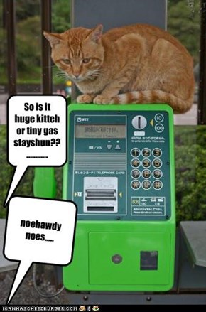 So is it huge kitteh or tiny gas stayshun??............
