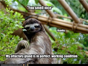 Way-too-literal sloth