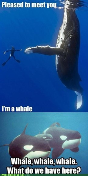 Oh Whale, Guess Whale Never Know