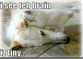 i see teh brain  iz tiny...