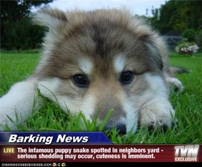 Barking News - The infamous puppy snake spotted in neighbors yard -serious shedding may occur, cuteness is imminent.