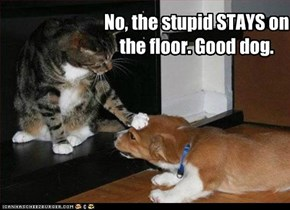 No, the stupid STAYS on the floor. Good dog.