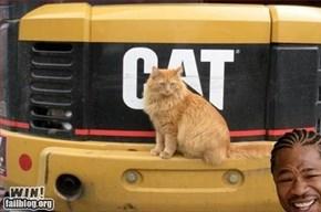 Cat on CAT WIN