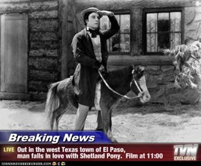 Breaking News - Out in the west Texas town of El Paso, man falls in love with Shetland Pony.  Film at 11:00