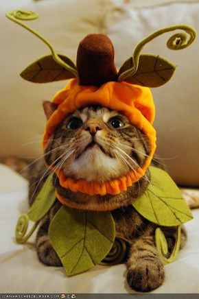 Cyoot Kitteh of teh Day: Iz Autumn Yet?