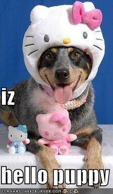 iz hello puppy