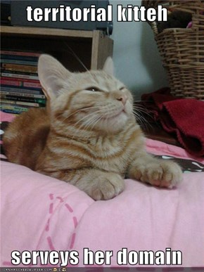 territorial kitteh  serveys her domain