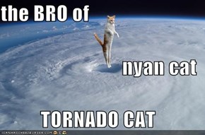 the BRO of nyan cat TORNADO CAT