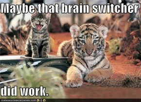 Maybe that brain switcher  did work.