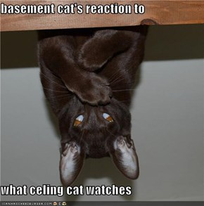 basement cat's reaction to  what celing cat watches