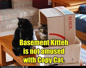 Basement Kitteh vs. Copy Cat