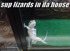 sup lizards in da house