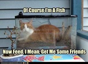 Of Course I'm A Fish