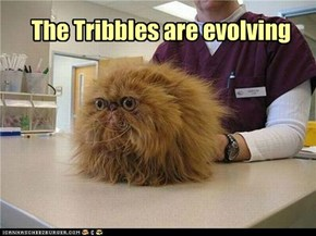 The Tribbles are evolving