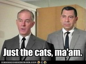 Just the cats, ma'am.
