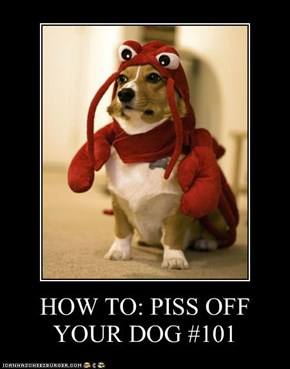 HOW TO: PISS OFF YOUR DOG #101