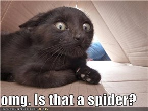 omg. Is that a spider?