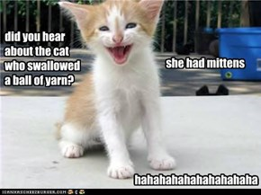 kitteh jokes